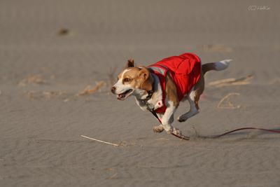 湯たんぽ犬(とステキ写真サイトの紹介)_f0154850_11281812.jpg
