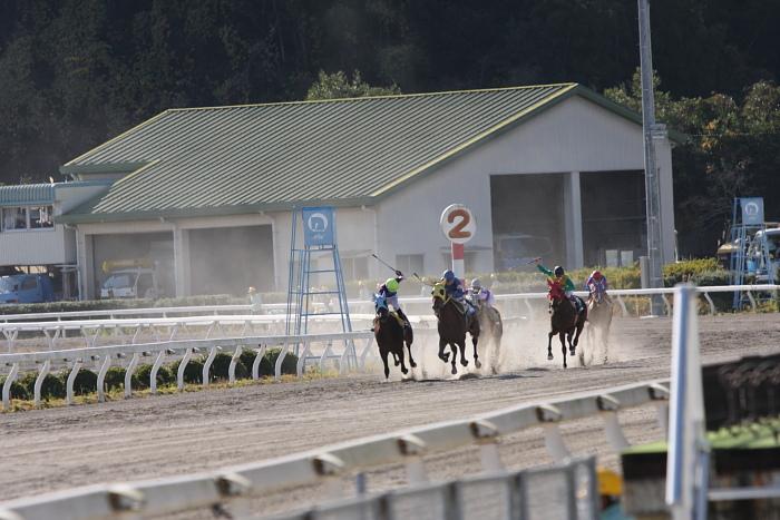 2009年12月6日(日) 高知競馬 1R ニワンゴ協賛 ニコニコ誕生日特別 D7 記者選抜_a0077663_18165356.jpg