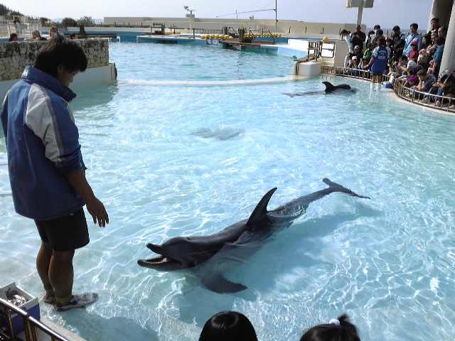 沖縄・最終日はイルカちゃんと^^♪_e0142585_12492056.jpg