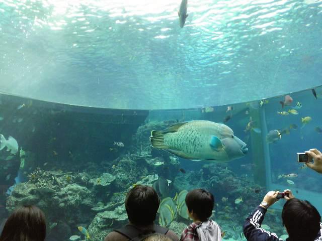 そして大きな海の仲間たち♪_e0142585_1342021.jpg