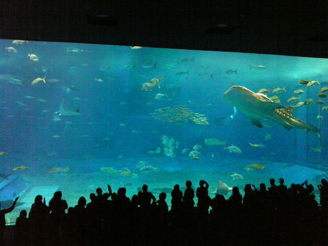 そして大きな海の仲間たち♪_e0142585_1342067.jpg