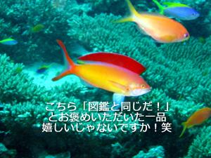 f0144385_2211479.jpg