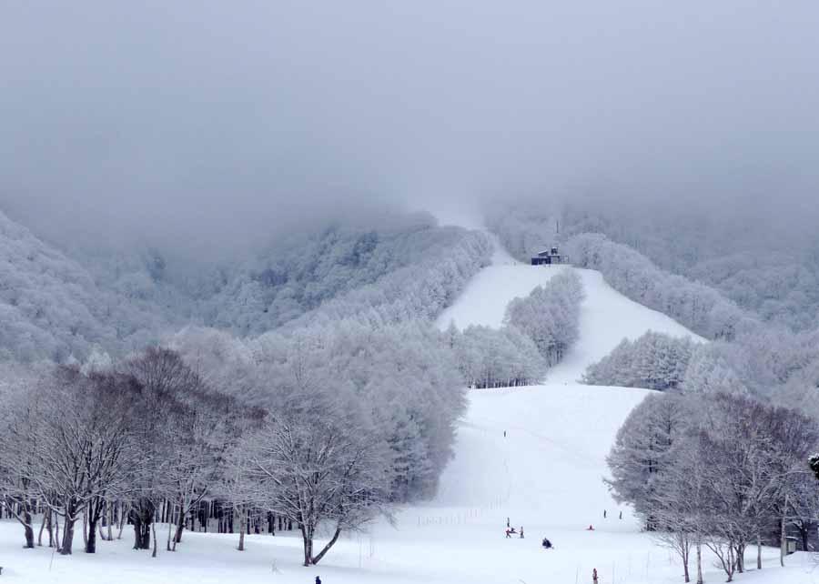初滑りィ〜_c0223095_15433093.jpg
