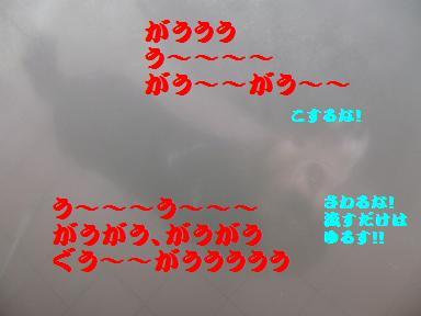 d0104209_23424357.jpg