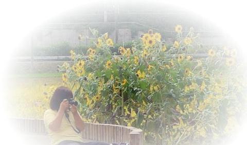 シクラメンの季節_d0147812_2225217.jpg