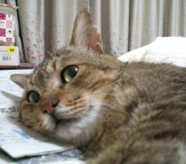 へけ爺で〆る : ゆきももこの猫...
