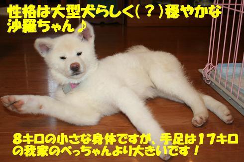 f0121712_22334947.jpg