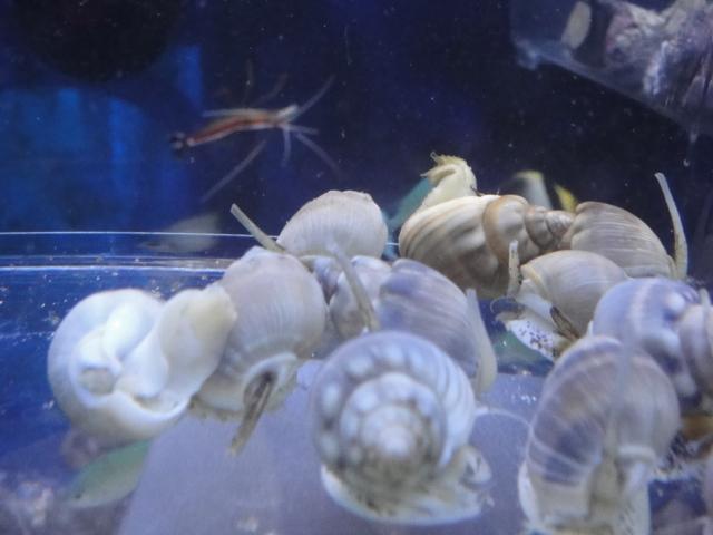 海水魚・熱帯魚・水草・日本産淡水魚_f0189122_13321342.jpg