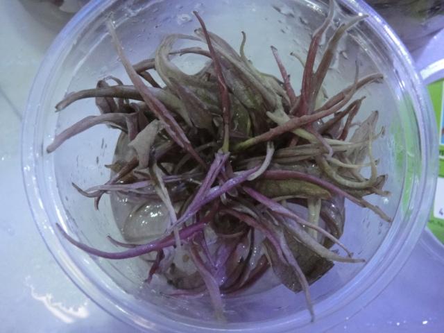 海水魚・熱帯魚・水草・日本産淡水魚_f0189122_13401757.jpg