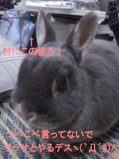 b0169631_22311648.jpg