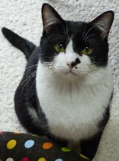猫のお友だち ジルくん編。_a0143140_17264146.jpg