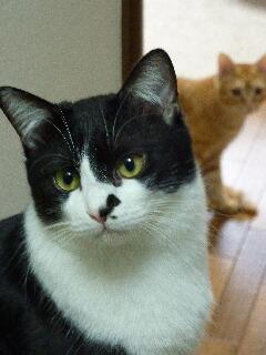 猫のお友だち ジルくん編。_a0143140_17271068.jpg