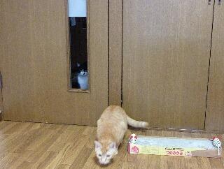 猫のお友だち ジルくん編。_a0143140_1727237.jpg