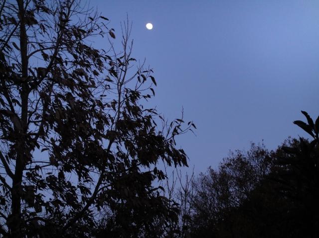 暮れなずむうみべの森&せんなん里海公園  by  (TATE-misaki)_c0108460_17504034.jpg