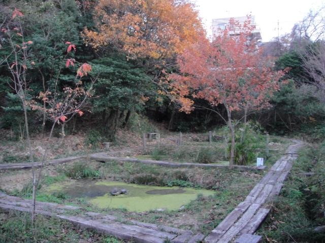 暮れなずむうみべの森&せんなん里海公園  by  (TATE-misaki)_c0108460_17511634.jpg