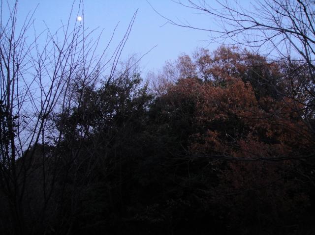 暮れなずむうみべの森&せんなん里海公園  by  (TATE-misaki)_c0108460_17531561.jpg