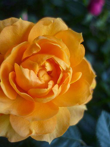 A little blossom 。。。。Daikanyama Garden Club 。。。.゜。*・。☆_a0053662_20114023.jpg