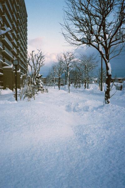 2009年12月の一日一枚_e0051186_16321592.jpg