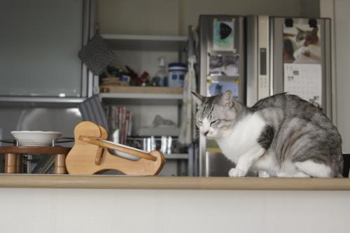 ご飯皿の前に座り込むお坊ちゃん