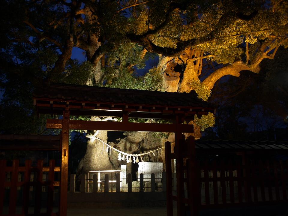 天然記念物がライトアップされます_b0114209_1631742.jpg