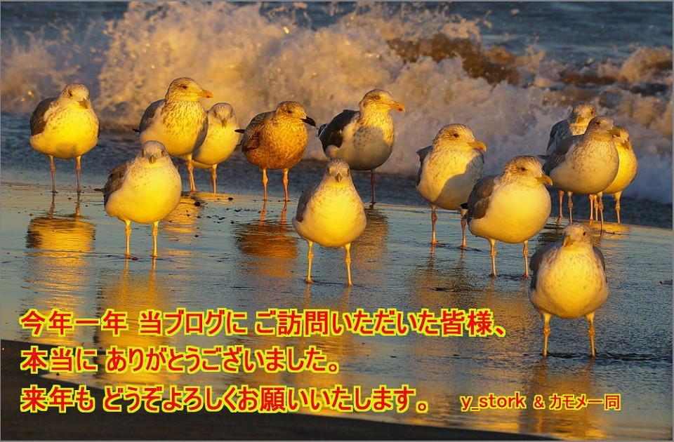 d0039021_13343679.jpg