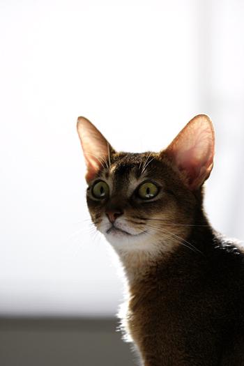 [猫的]よいお年を_e0090124_8113555.jpg