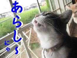 b0151748_09756.jpg