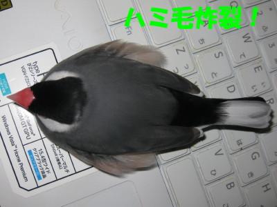 b0158061_2045819.jpg