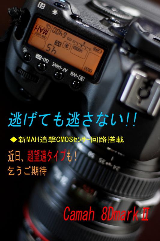 c0134879_1750491.jpg