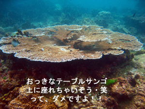 f0144385_20501487.jpg