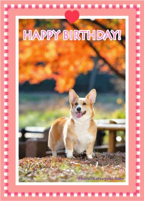 ネスタベビーちゃん、はなちゃん、お誕生日おめでとう♪_d0102523_14575963.jpg