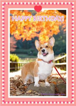 ネスタベビーちゃん、はなちゃん、お誕生日おめでとう♪_d0102523_14581122.jpg