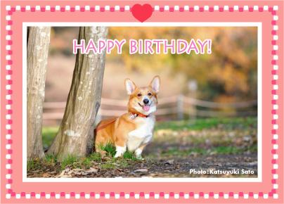 ネスタベビーちゃん、はなちゃん、お誕生日おめでとう♪_d0102523_14582871.jpg