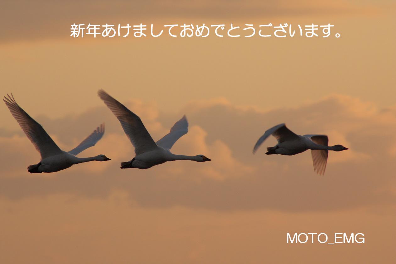 f0159834_19454646.jpg