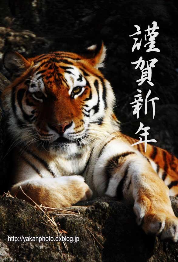 謹賀新年!~寅年~(虎視眈々追加)_b0157849_1555586.jpg