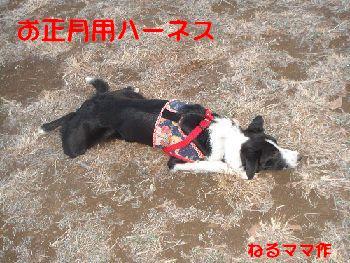 b0101991_1649421.jpg