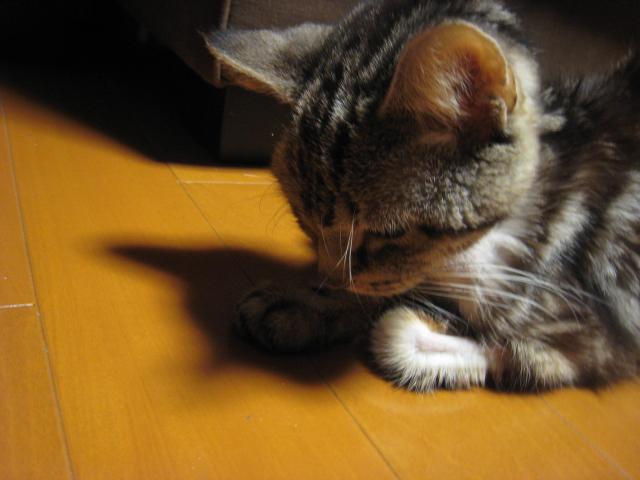 Sleepy Tiger_c0172504_7373997.jpg
