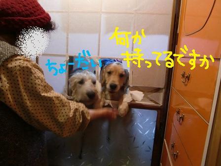 f0176830_20364926.jpg