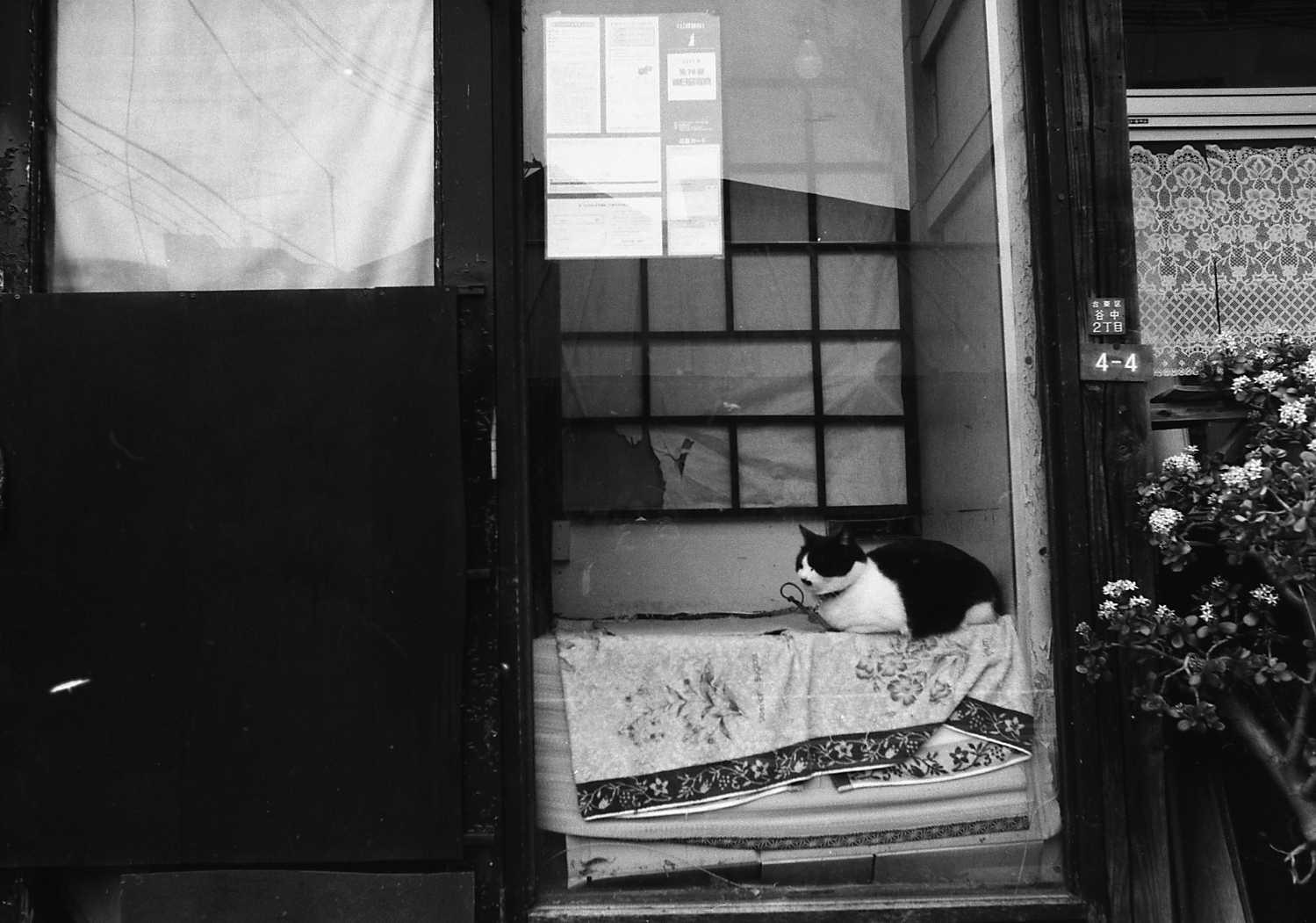 ワークショップ東京下町撮影 第2弾 _f0050534_17455970.jpg