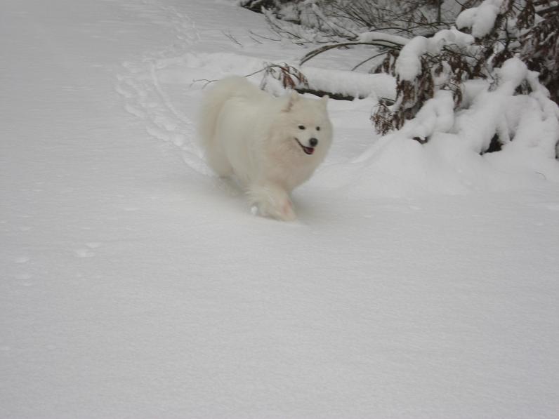 初雪~♪_b0177436_13394793.jpg