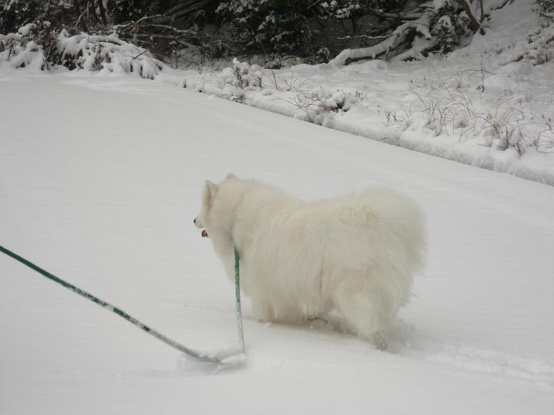 初雪~♪_b0177436_13441428.jpg