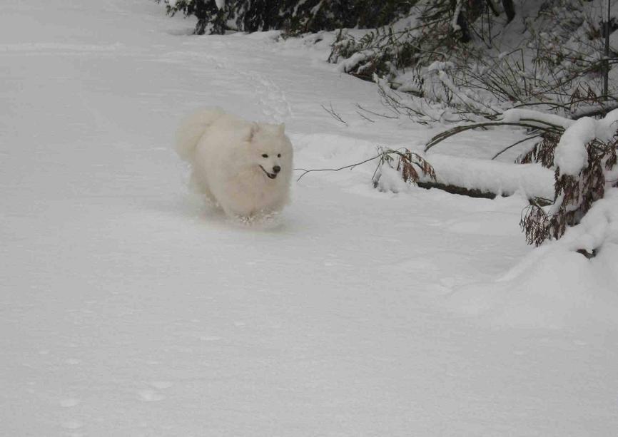 初雪~♪_b0177436_13444862.jpg