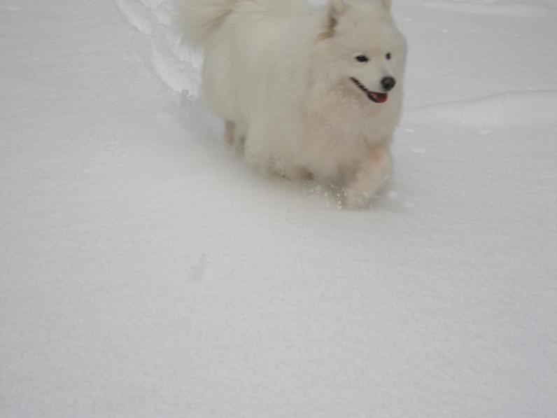 初雪~♪_b0177436_13452384.jpg