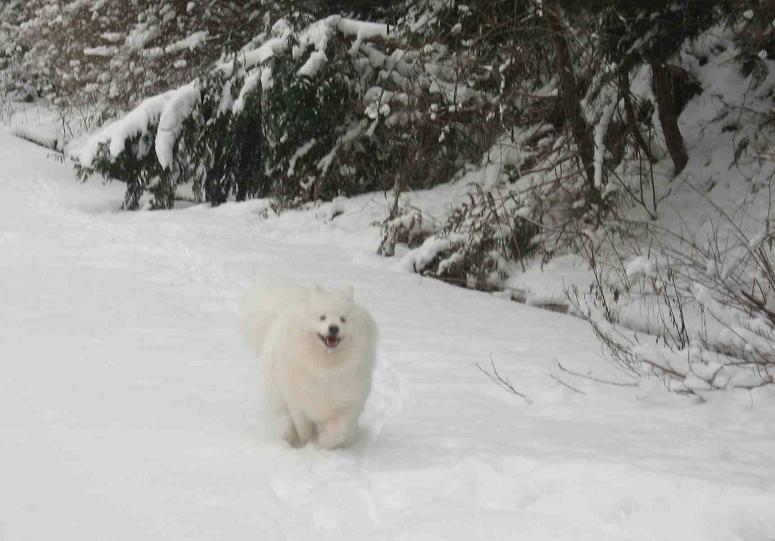 初雪~♪_b0177436_13495752.jpg