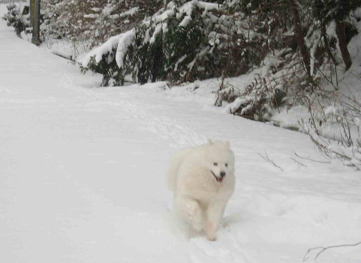 初雪~♪_b0177436_13502130.jpg