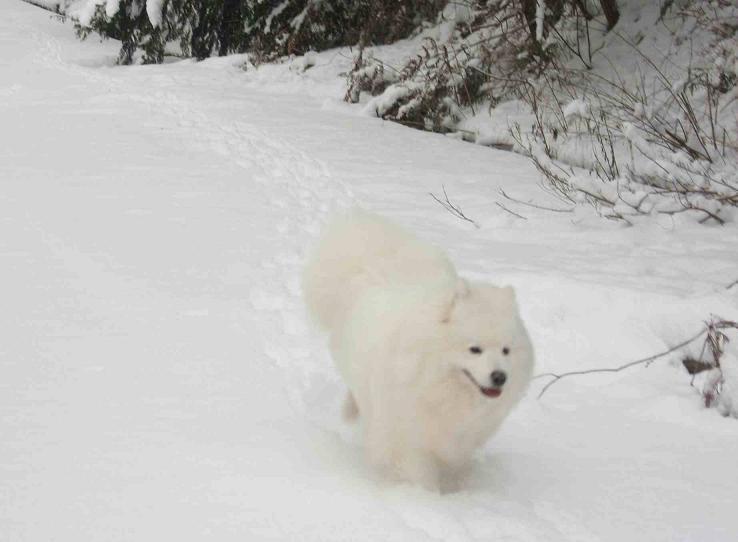 初雪~♪_b0177436_1351790.jpg