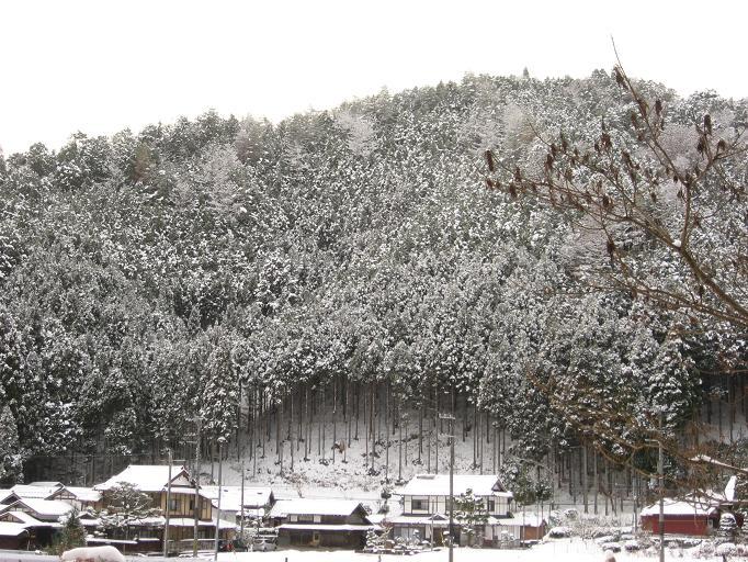 初雪~♪_b0177436_1413878.jpg