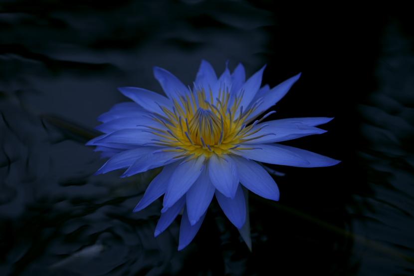 青白き思い_f0195893_1835057.jpg