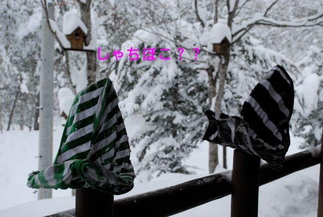 f0039538_20111450.jpg