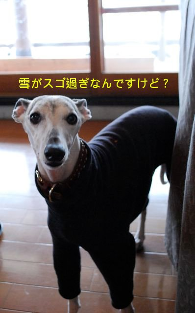 f0039538_20163794.jpg